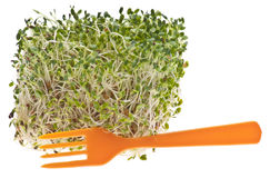Eating Healthy Alfalfa Sprouts Royalty Free Stock Image