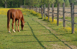 Eating Horse Royalty Free Stock Photos