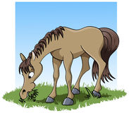 Eating horse. Cartoon-style illustration: a cute young horse eating grass Royalty Free Stock Photo