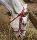 Eating horse Royalty Free Stock Image