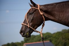 Eating horse Stock Photo