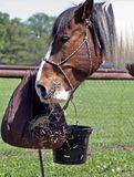 Eating horse Stock Photography