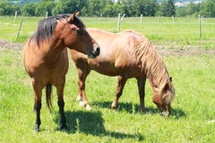 Eating horses stock images