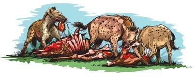Eating hyenas Stock Image