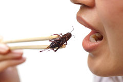 Eating insect. Asian female eating cricket - Eating insect concept Stock Photography