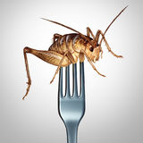 Eating Insects Concept Royalty Free Stock Photo