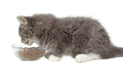 Eating kitten. Close-up Royalty Free Stock Images