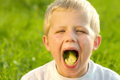 Eating little boy Royalty Free Stock Photography