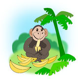 Eating Monkey. A funny monkey with a whole lot of bananas Stock Image