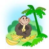 Eating Monkey Stock Image