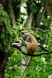 eating monkey Stock Photo
