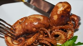 Eating octopus. Fresh fish, close up Royalty Free Stock Photos