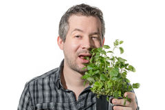 Eating plant Stock Photography