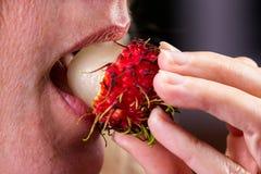 Eating a rambutan Royalty Free Stock Photography