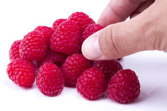 Eating raspberries. On white Royalty Free Stock Images