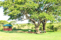 Eating and resting place under a huge african tree. Nairobi National Park, Kenya Stock Photography