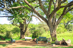 Eating and resting place under a huge african tree Royalty Free Stock Images