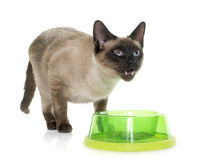 Eating siamese cat Stock Photo