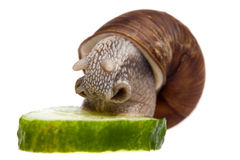 Eating snail Stock Photo