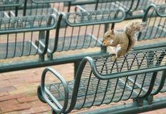 Eating squirrel Royalty Free Stock Photos