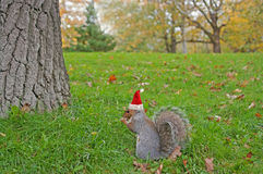 Eating squirrel wearing red Christmas hat Stock Photo