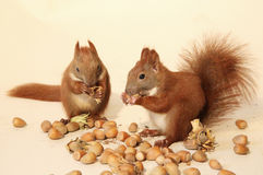 Eating squirrels Royalty Free Stock Photography