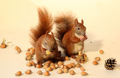 Eating squirrels Royalty Free Stock Images