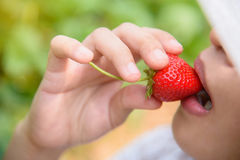 Eating a strawberry Stock Photo