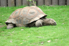 Free Eating Time For Big Turtle Royalty Free Stock Photos - 1768748