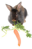 Eating time for lion rabbit Stock Photos