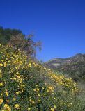Eaton Canyon flowers Royalty Free Stock Photos