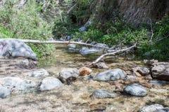 Eaton jaru strumień biega przy Eaton spadki Wlec podwyżkę w Pasadena blisko Los Angeles, Kalifornia Zdjęcie Royalty Free