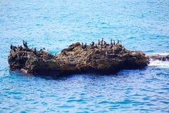 Eau de mer bleue de détente de roche d'oiseaux images stock