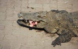 Eau de mer de crocodile alimentant la Thaïlande Image libre de droits