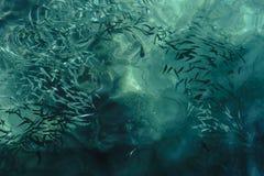 Eau de mer limpide avec des poissons à l'intérieur Photo stock