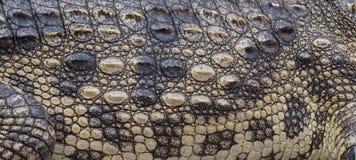 Eau de mer Thaïlande de crocodile Photographie stock libre de droits