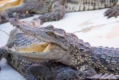 Eau de mer Thaïlande de crocodile Images stock