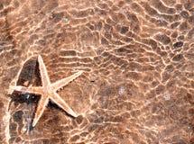 Eau de mer tropicale d'étoiles de mer énormes Photographie stock libre de droits