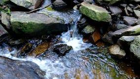 Eau douce en rivière banque de vidéos