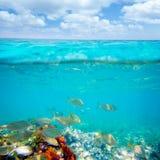 Eau du fond méditerranéenne avec l'école de poissons de salema Images libres de droits