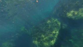 Eau du fond naviguante au schnorchel en mer entre les récifs avec des poissons, méduses banque de vidéos