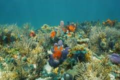 Eau du fond sur un fond de la mer avec l'espèce marine colorée Photographie stock