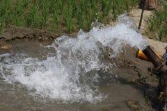 Eau-eau partout Photo stock