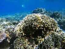 Eau peu profonde de rivage exotique d'île Photo sous-marine de paysage tropical de bord de la mer Images stock
