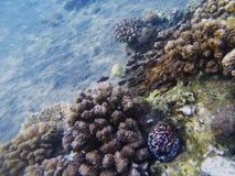 Eau peu profonde de rivage exotique d'île Photo sous-marine de paysage tropical de bord de la mer Image libre de droits