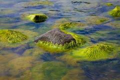 Eau polluée d'algues Photo stock