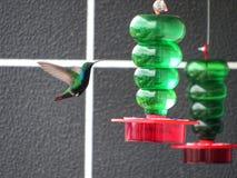 eau potable de colibri dans le poste d'eau potable Photographie stock