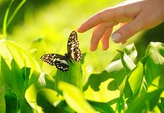 Eautiful butterfly Royalty Free Stock Photo