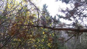 Ð'eautiful owl. Beautiful owl sits on the branch in the forest stock image