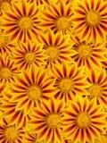 Eautiful yellow flowers Stock Image